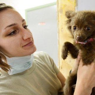 veterinářka